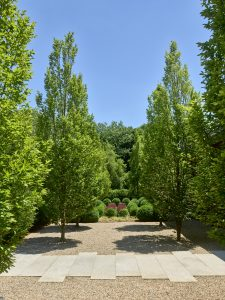 Trees and Landscaping